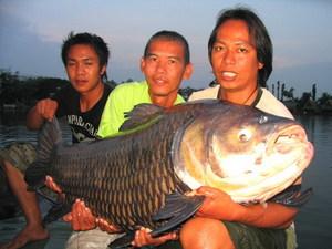 50kg Giant Siamese Carp fishing Bangkok