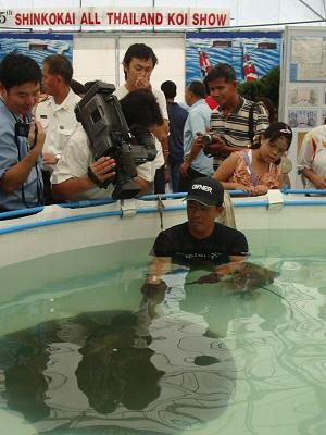 Giant freshwater stingray exhibition in Rangsit