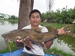 catfish goonch
