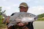 catfish salween rita