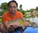yellow catfish