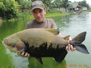 Fishing in Thailand at Palm Tree Lagoon 2016