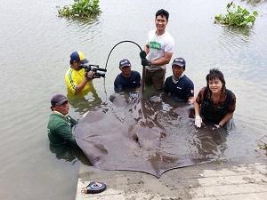 Ban Aor TV Stingray fishing show Maeklong River