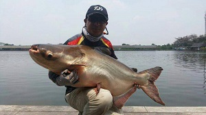 Big Catfish fishing in Bangkok