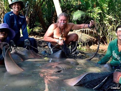 Big Giant freshwater stingray for Tim Webb
