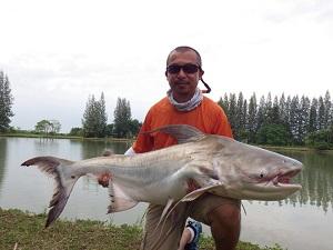Fishing Chaophraya Catfish IT Thailand