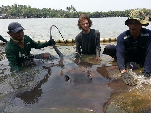 Giant Stingray fishing Maeklong River