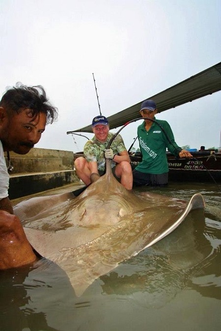 Giant freshwater stingray fishing in Thailand