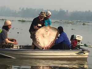 Japanese group stingray fishing Mae Klong River