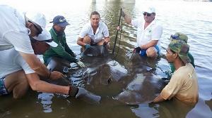Polish anglers Day 2 Stingray fishing Thailand