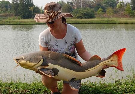 Predator fishing Thailand at IT Lake