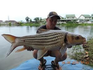 Thailand carp fishing Palm Tree Lagoon 2015