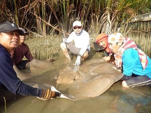 Wild freshwater stingray fishing