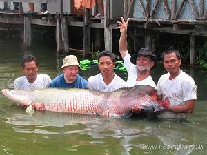 150 kg Arapaima Gigas caught fishing in Bangkok Thailand