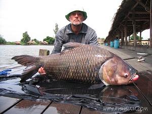 50 kg Giant Siamese Carp caught fishing in Thailand