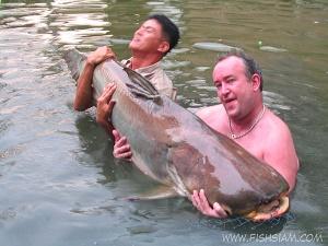 80 kg plus Mekong Catfish caught fishing in Bangkok Thailand