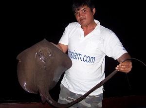 Cow Tail Stingray fishing Ban Pakong Thailand