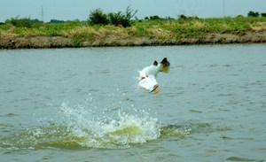 Fifty Fish haul Barramundi Ponds fishing in Bangkok