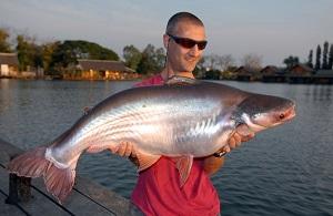 Fishing Catfish Bangkok at Bungsamran Lake