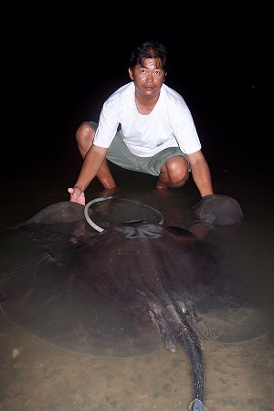 Fishing Giant freshwater stingray Ban Pakong River