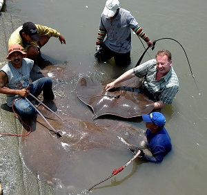 Fishing for freshwater stingrays on Mae klong River
