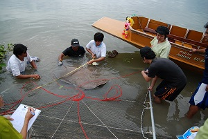 Fishing for stingrays TBS Japan in Thailand