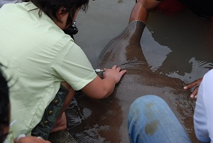 Fishing for stingrays with TBS Network from Japan