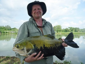 Fly Fishing predators Thailand