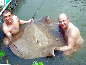 Freshwater river stingray fishing