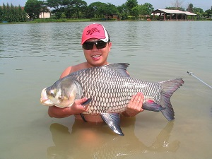 Giant Siamese Carp caught fishing  mackerel deadbait  IT Lake
