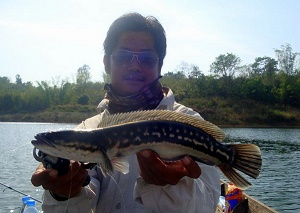 Giant Snakehead Fishing Thailand