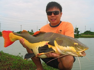 IT Lake Monsters Fishing Catfish in Thailand