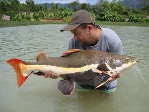 Large Predator haul caught predator fishing Topcats Thailand