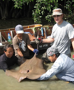 Maeklong River Giant Stingray Fishing Thailand