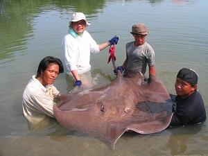 Maeklong River Stingray fishing brace Thailand