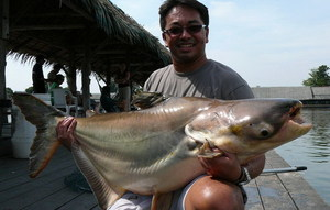 Mekong Catfish at Bungsamran Lake