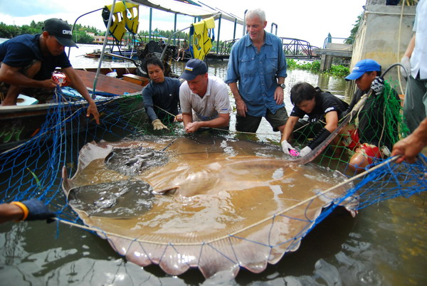 River Monsters Thailand Jeremy Wade fishing Stingrays