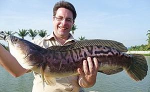 Snakehead fishing at Amazon BKK1 Predator Lake
