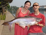 Striped Catfish fishing in Thailand