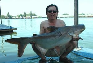 Thai Mekong Catfish fishing in Bangkok