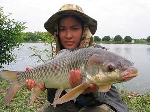 Thailand carp fishing at Bung Buk produces Thai carp species