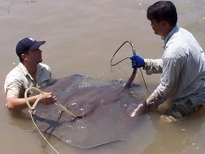 Zeb Hogan National Geographic fishing at the Ban Pakong River