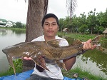 catfish goonch