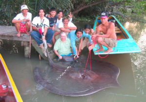 client giant freshwater stingray