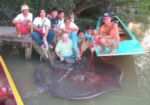 client giant freshwater stingray