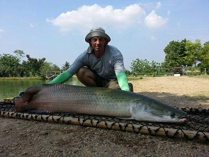 Amazon BKK2 Arapaima fishing trip 2014