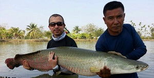 Arapaima Fishing Thailand Amazon Bangkok