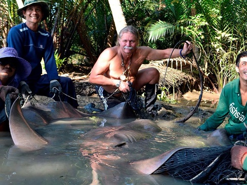 Big Giant freshwater stingray for Tim Webb