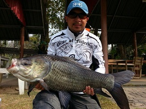 Carp fishing Cha Am Fishing Park Thailand