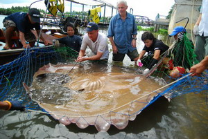 Freshwater stingray fishing tours in Thaialand